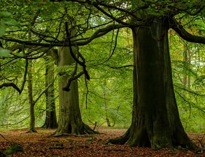 Eursap To Plant 2000 Trees, Creating A Hectare Of New Forest.